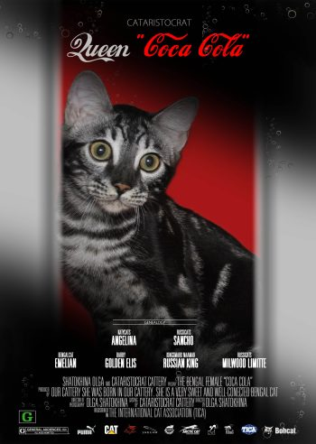 Bengal cat COCA COLA from Bengal cattery Cataristocrat, Movie-Poster