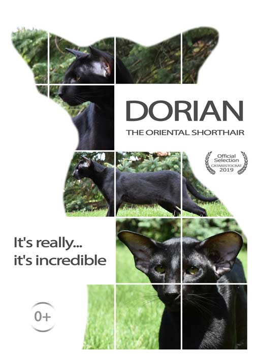 Oriental cat Dorian from Oriental cattery Cataristocrat, Movie-Poster