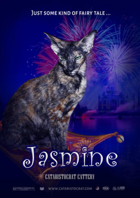Oriental cat JASMINE from Oriental cattery Cataristocrat, Movie-Poster