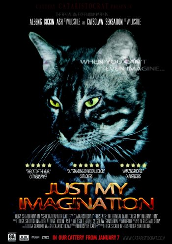 Bengal cat Just my Imagination from Bengal cattery Cataristocrat, Movie-Poster