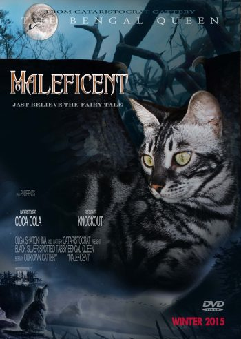 Bengal cat MALEFICENT from Bengal cattery Cataristocrat, Movie-Poster