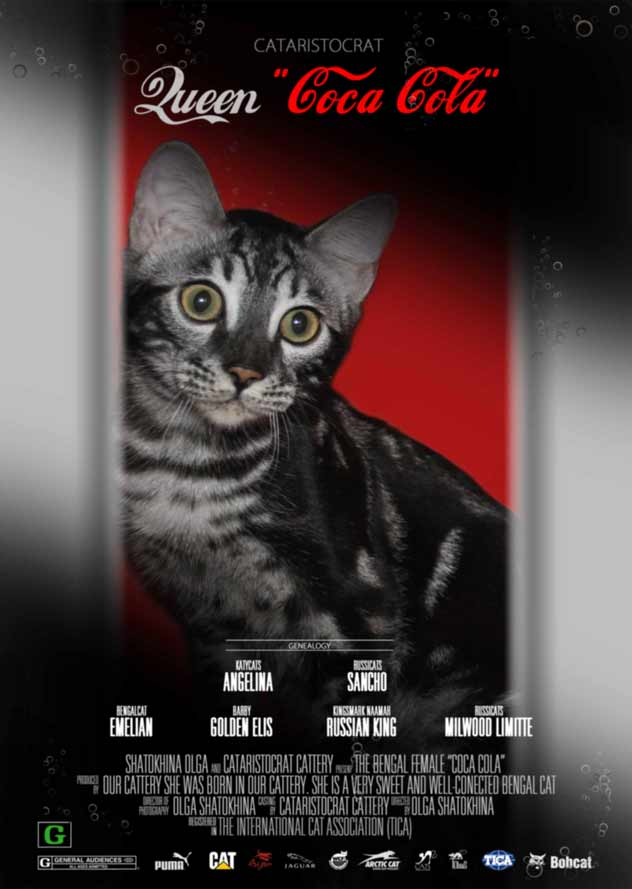 Coca Cola Bengal cat from Bengal cattery Cataristocrat, Movie-Poster
