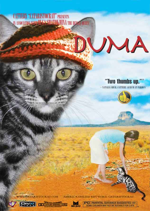 Duma Bengal cat from Bengal cattery Cataristocrat, Movie-Poster